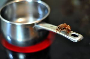 800px-Frog_and_saucepan